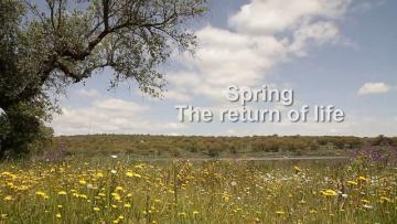 SPRING, THE RETURN OF LIFE